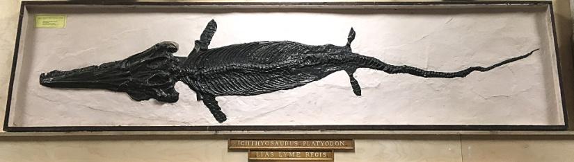 ichtyosaur