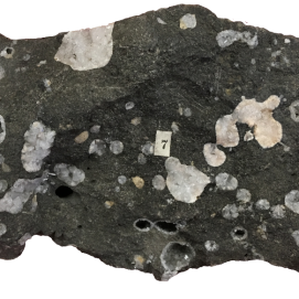 Basalt. Once contained gas bubbles now filled with the zeolite mineral Phillipsite. Paleogene (60Ma), Giant's Causeway, Co. Antrim