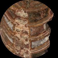 Rayonoceras_circle